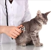Ветеринарные клиники в Туймазах